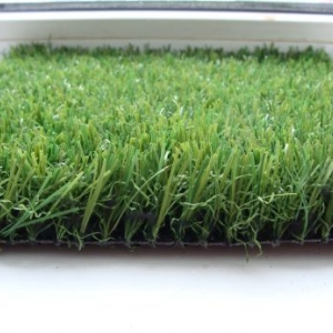 Ландшафтная трава Dream