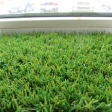 Ландшафтна трава Dream